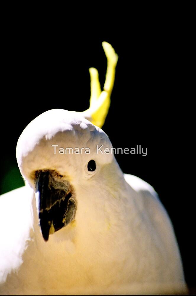 Polly by Tamara  Kenneally