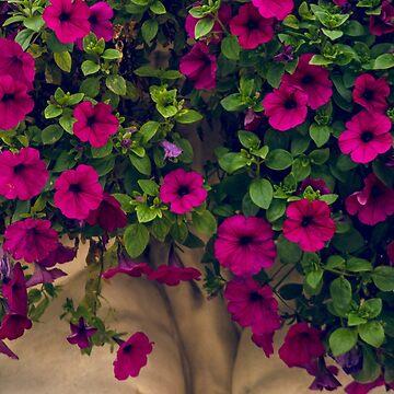 Fleur Lux by danafazz
