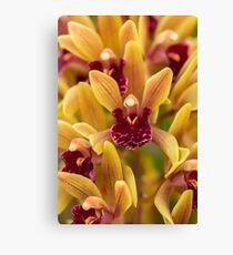 Orchid J3 Canvas Print