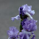 Mary Frances Has The Blues by Debbie Oppermann