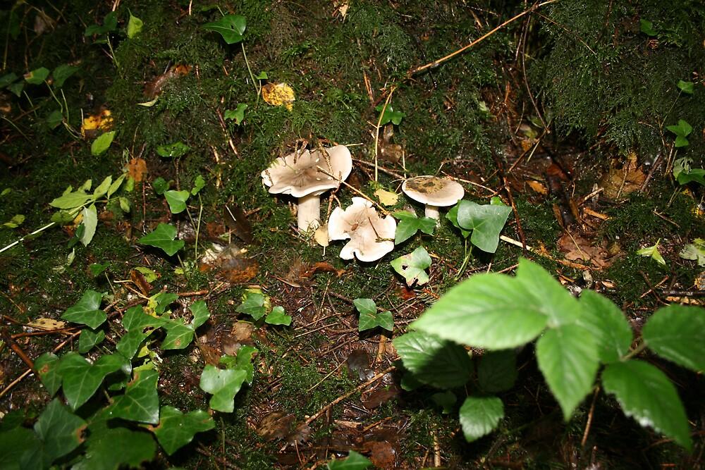 Fungi in Coole Park 2 by John Quinn