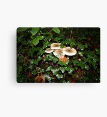 Fungi in Coole Park 3 Canvas Print