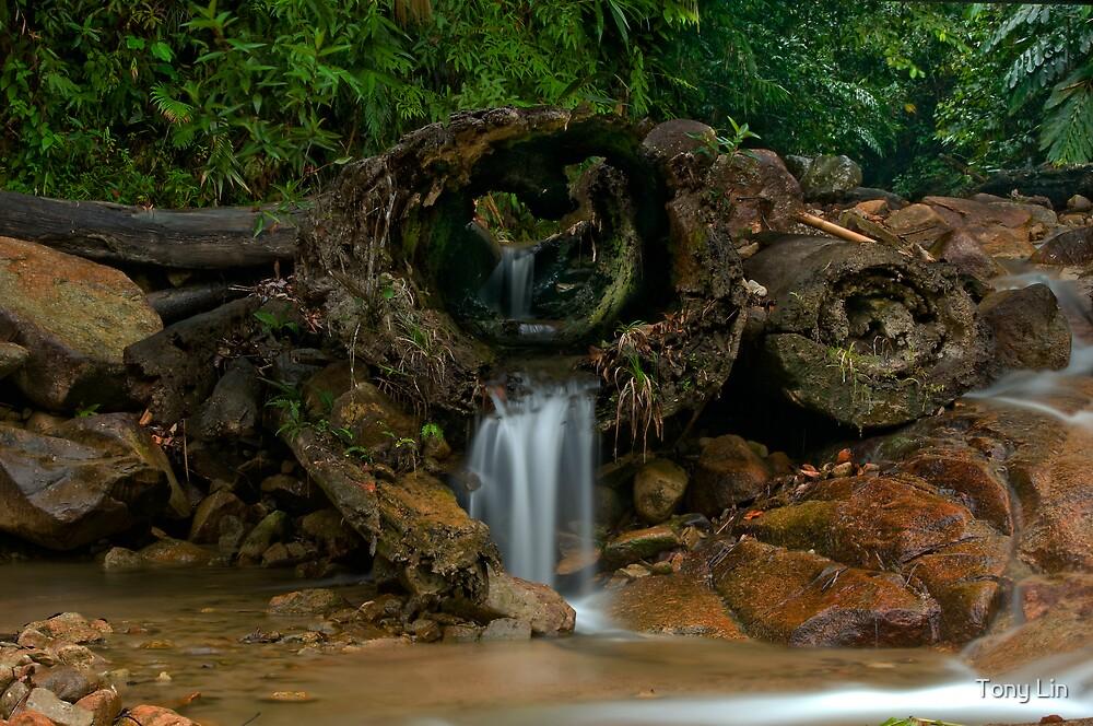 The Waterlog by Tony Lin