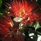 Pohutukawa flower by Jodi Fleming