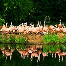 flamingo 1 by ghenadie