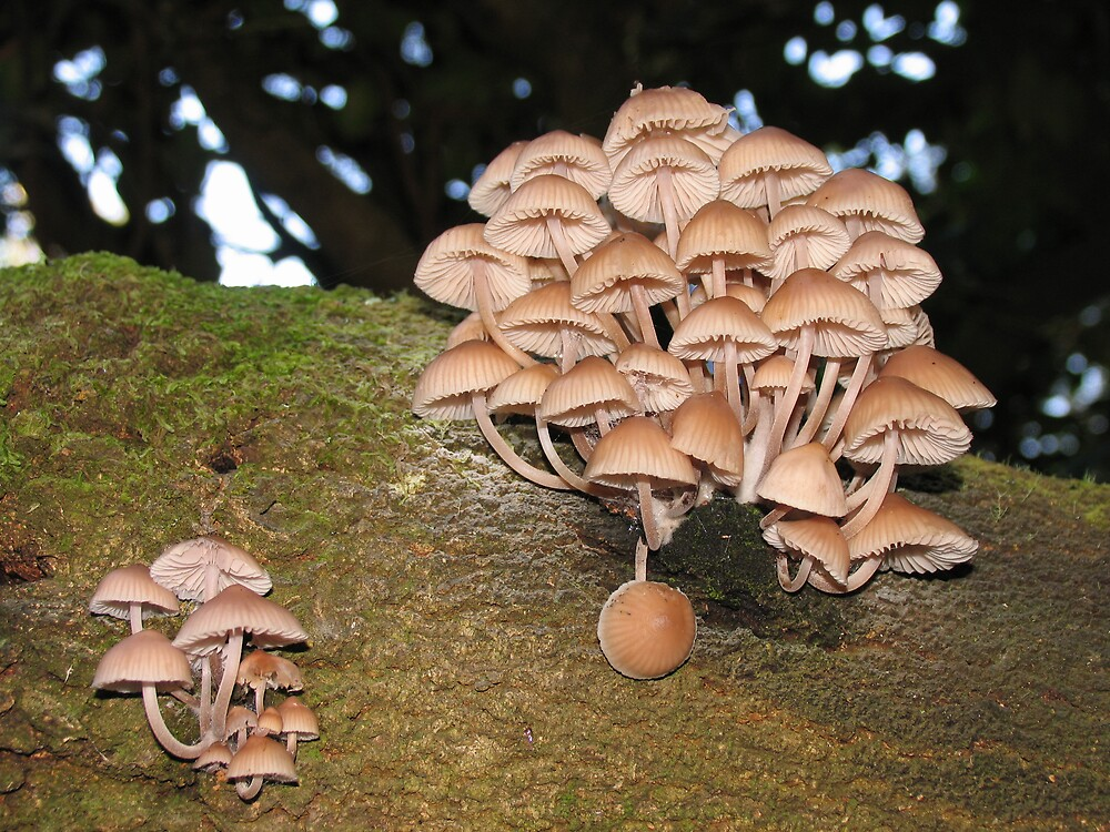 funghi by dave whyte