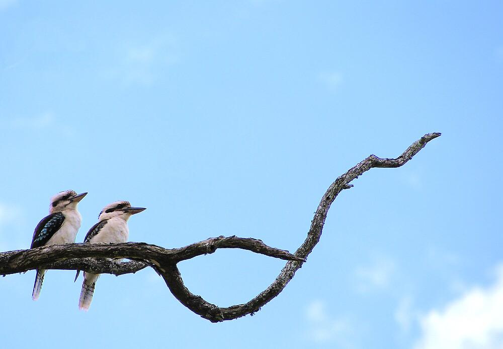 Kookaburras by Keith Smith