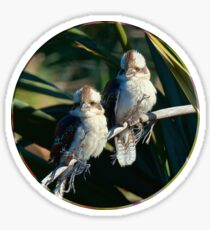 D1G1TAL-M00DZ ~ ICON ~ GALLIMAUFRY ~ Kookaburra Cute by tasmanianartist Sticker