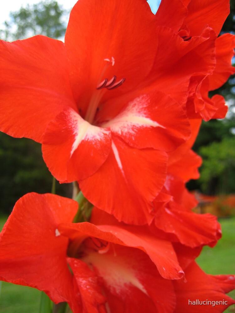 Bright Red Flower by hallucingenic