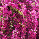 Pink Flowers by christinawalker