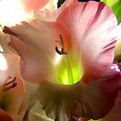 delicate beauty ... by SNAPPYDAVE
