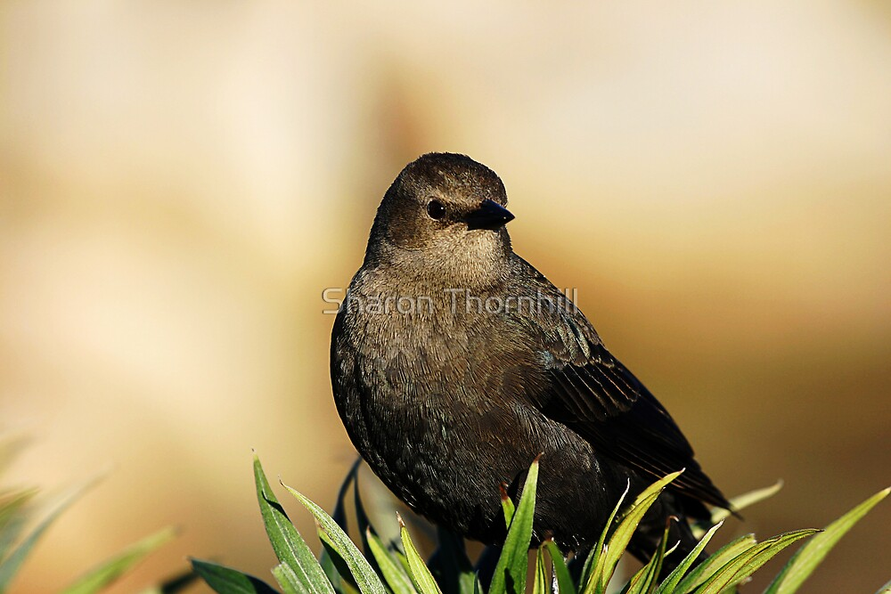 A Bird in the Bush by Sharon Thornhill