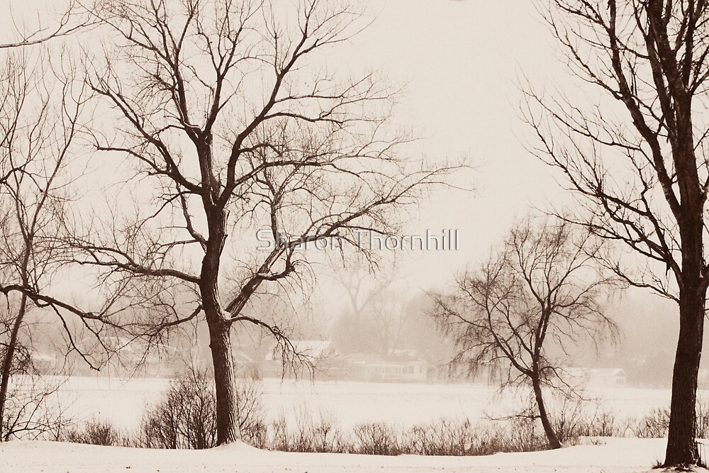 Winter Morning Snow by Sharon Thornhill