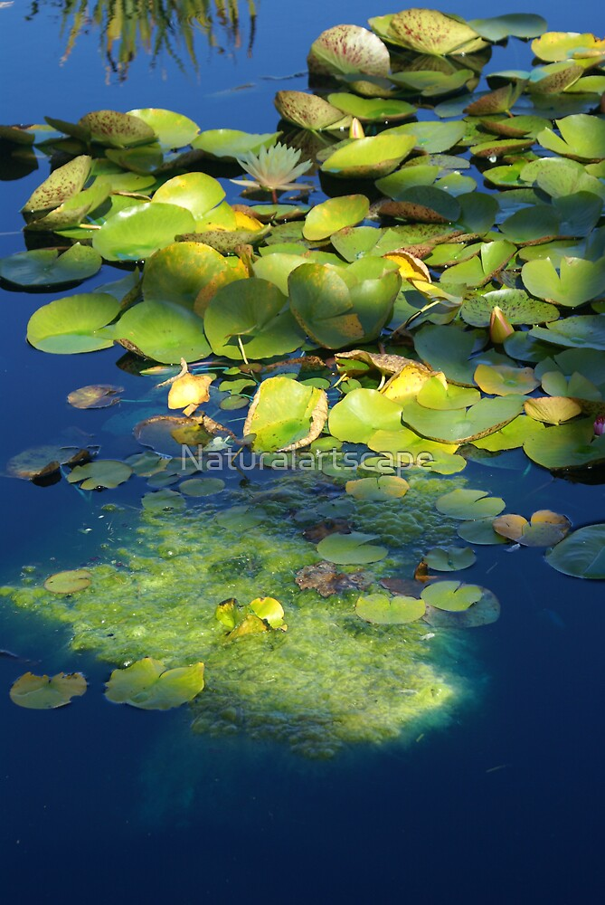 Gleaming Lilly by Naturalartscape
