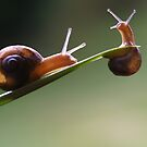 hang on little buddy....i'll save you by Clare Colins