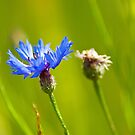 Feeling blue by Dominika Aniola