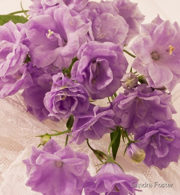 Lavender And Lace  by Sandra Foster