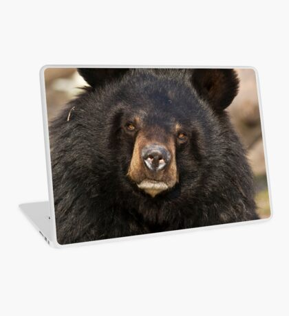 Asian Black Bear Laptop Skin