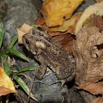 Frog by kdugan01