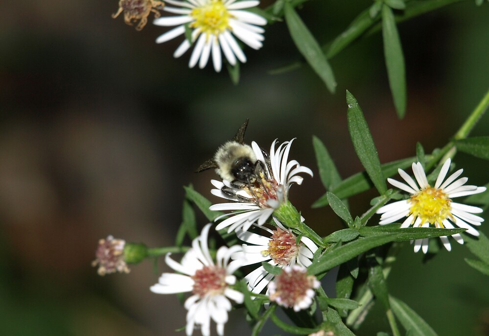 Buzzing About by Kimberly  Dugan