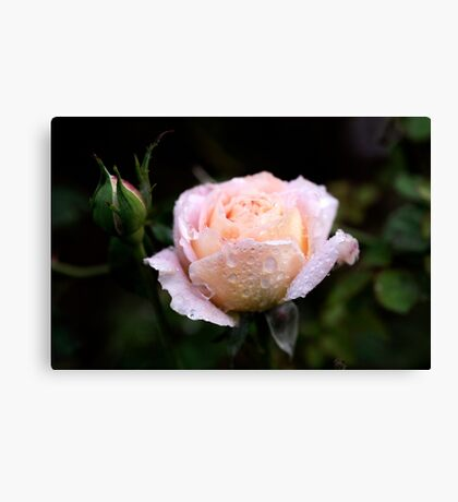 Roses in my Garden Canvas Print