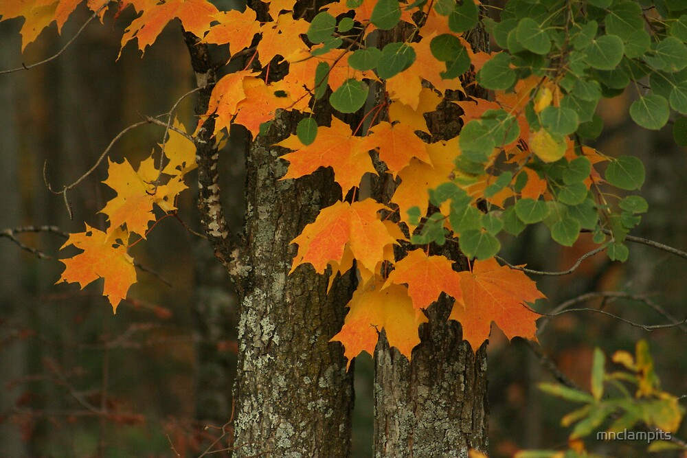Fall Color by mnclampits