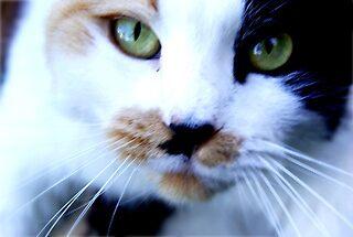 here kitty kitty.... by Kaitlyn Ruff