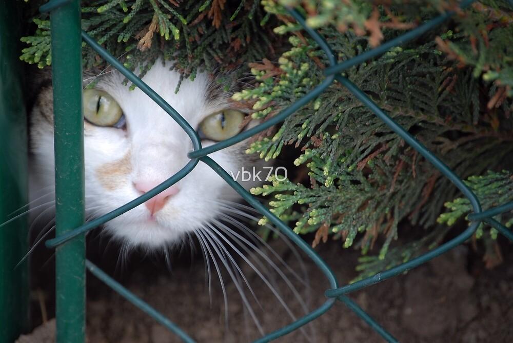 Peeking Through The Fence by vbk70
