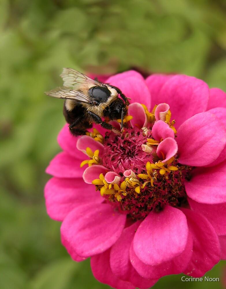 """ Buzzzzzzzy "" Bee ! by Corinne Noon"
