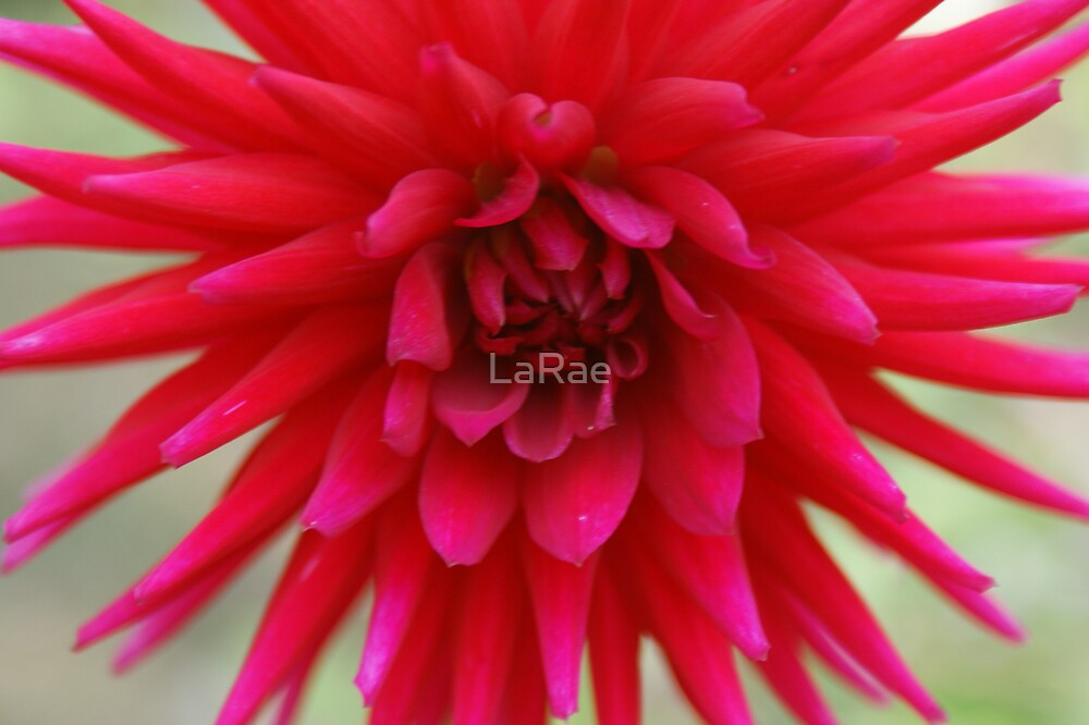 Pretty in Pink by LaRae