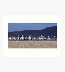 Pelican Point Art Print