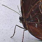 Butterfly Profile by lezvee