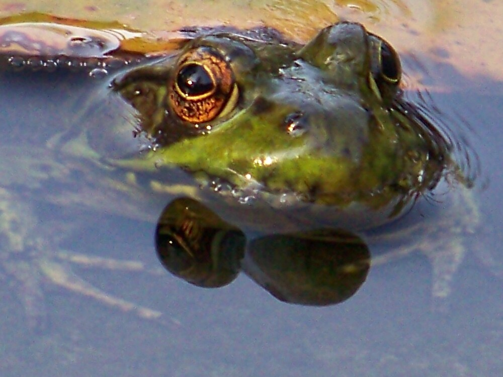 Jeremiah was a bullfrog by Mindy Miller