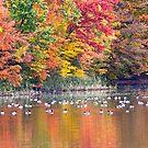 Fall Fantasy ! by robkal