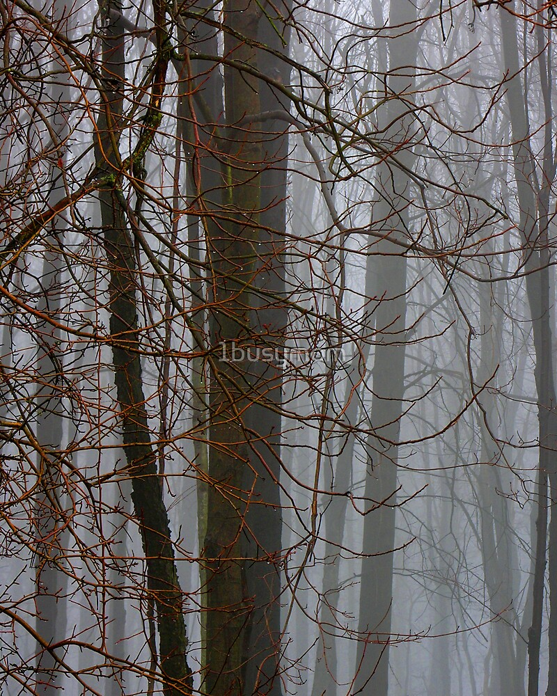 seeing the fog through the trees by 1busymom