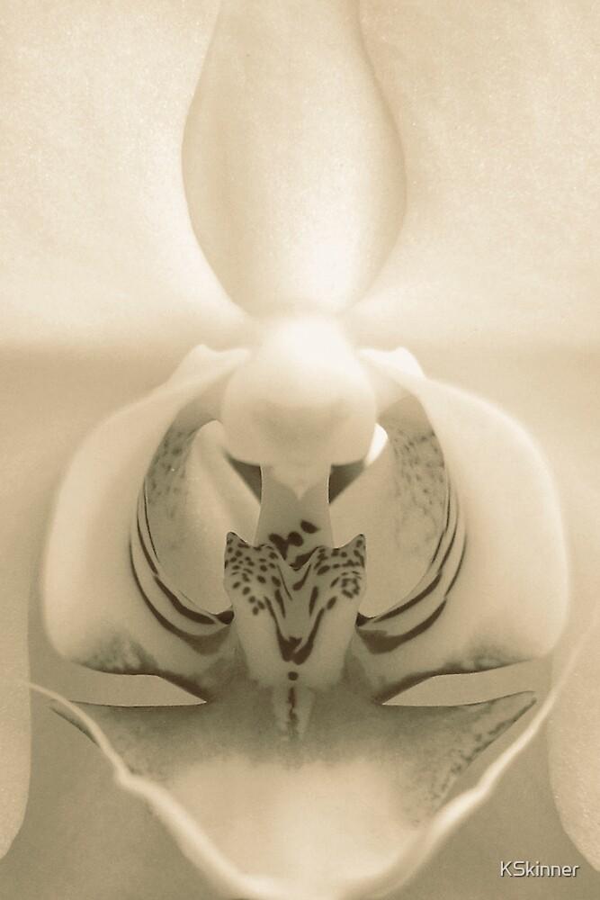 Erotic Orchid by KSkinner