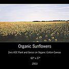 ORGANIC SUNFLOWERS by Sam Dantone