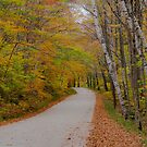 Vermont Country Road by Gary Lengyel