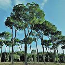 The Umbrella Pines................................Rome by Fara