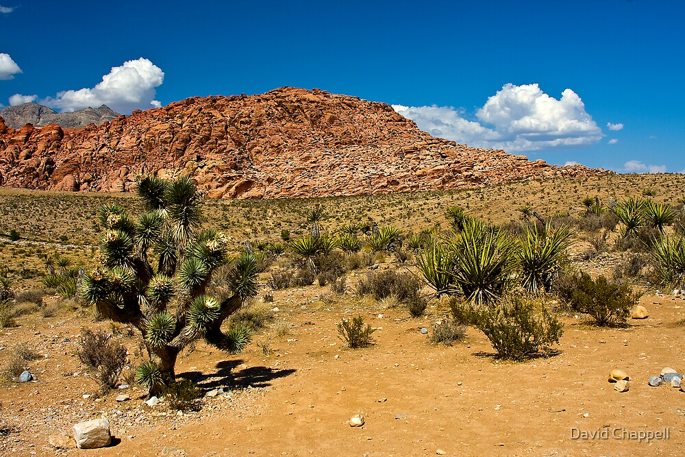 Desert Beauty 4 by David Chappell