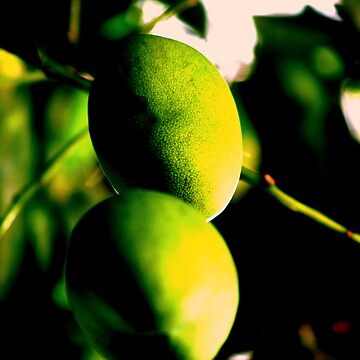 Mangos by AndrewMorrison
