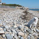 Sylvie at Matunuck Beach; on the Rocks by Jack McCabe