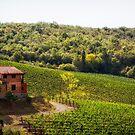 Back Road - Tuscany - Italy by Yannik Hay
