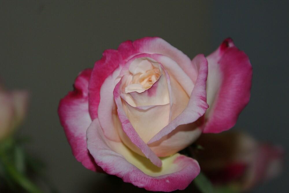 flower by brendanrdale