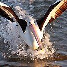 Splash Down!!!! by Patricia Gibson