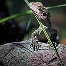 Water Dragon of Glenbrook by STEPHEN GEORGIOU PHOTOGRAPHY