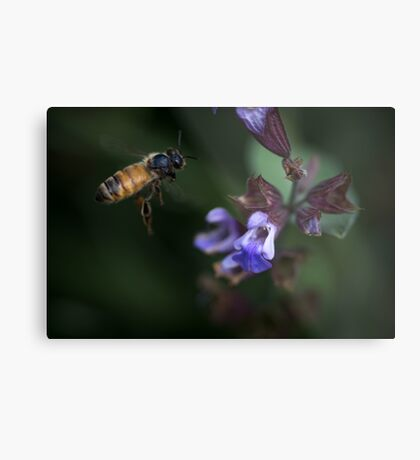 Sage and Honey Metal Print