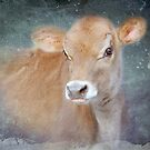 Little Jersey Calf by Clare Colins