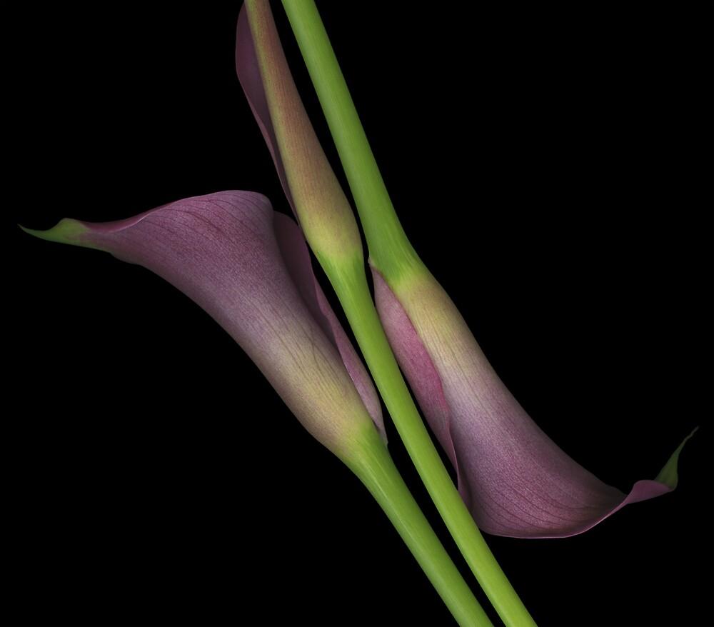 Alignment by Marsha Tudor