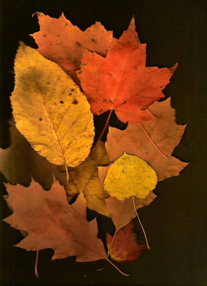 Autumn Leaf Collection 8 by Gene Cyr